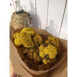 Fleur séchée ton jaune
